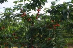 fruitbedrijf-4