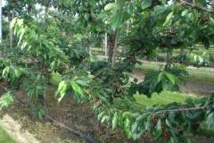 fruitbedrijf-5