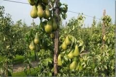 fruitbedrijf-7
